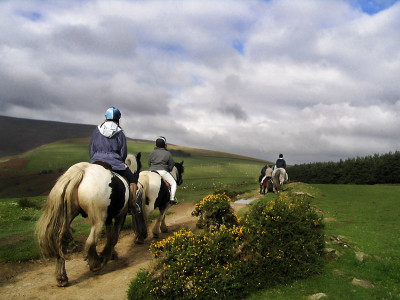 Castleton Horses