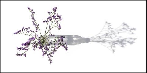 Flower Duet