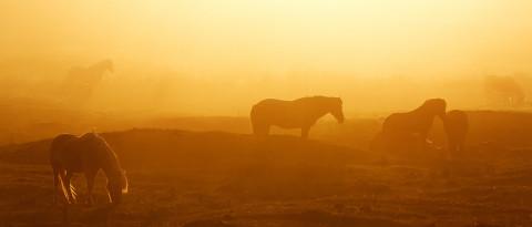 Equestrian Glow